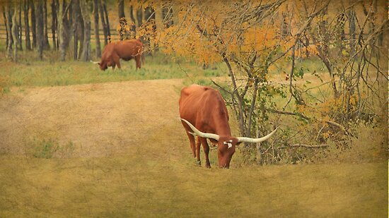 Texas Longhorns by kristijohnson