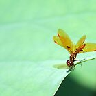 Dragonfly on the Edge by Sabrina Ryan