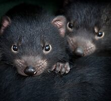Tassie Devil Joeys by Doug Thost