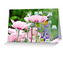 Rose Poppies blooming Greeting Card