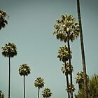 Palms in LA by Lisa Taliana