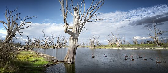 Murray River Scene by Shannon Rogers