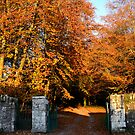 Autumn at Anaverna by Mairead1