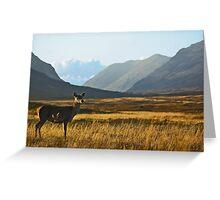 Wild Red Deer Grazing Greeting Card