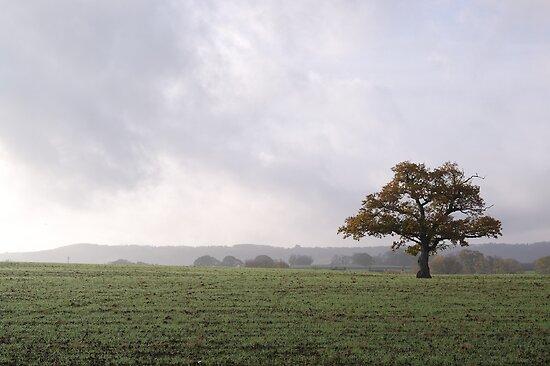 Autumn Oak by ruleamon
