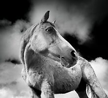 Horse (20-2) After the Storm by Raymond Kerr