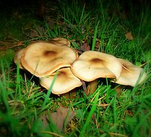 Pancake Mushrooms by shelleybabe2