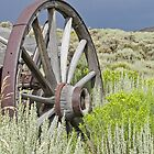 Sage and Wagon Wheels by Rachel Sonnenschein