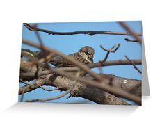 Chipping Sparrow in Fall Maple Greeting Card