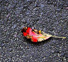 Dying Beauty by Deborah Crew-Johnson
