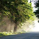 Sunday Drive by Dawne Olson