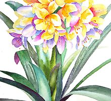 """Clivia """"Golden Dragon"""" by Pat Yager"""