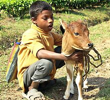 On the road to Manas...a  boy and his calf by John Mitchell