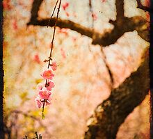 Cherry Tree Secret Garden by Lynnette Peizer