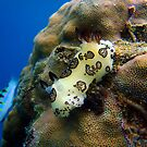 Nudibranch by tracyleephoto