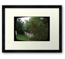 birds eye  Framed Print