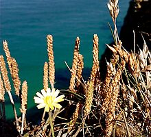 Flowers on a Cliff Edge by Johnathan Bellamy