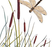Fly, Dragonfly! by Constance Widen