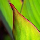 Canna leaf study by Celeste Mookherjee