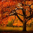 Red Oak Tree by LudaNayvelt