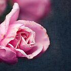 Romance by Josie Eldred