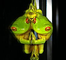 Narcissistic Frog... (Litoria Chloris) by Neil Ross