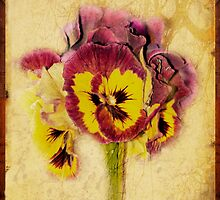 Pansy by Margi