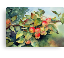 Green crab apples Canvas Print