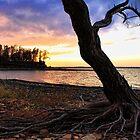 Roots by Carolyn  Fletcher