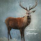 Christmas Deer by Carol Bleasdale