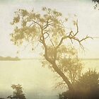 Mesquite Tree and the Lake by Lisa Holmgreen