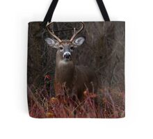 Young Buck - portrait - White-tailed Deer Tote Bag