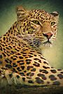 Leopard by AD-DESIGN