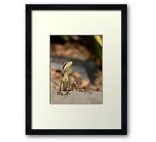 Are you looking at me?? Framed Print