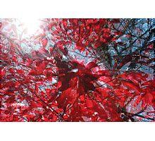 Black and Red Crescendo Photographic Print