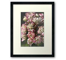 Softly Nature Framed Print