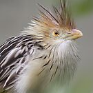 Bad Hair Day by April-in-Texas