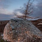 Rock on the Barrens by Robert Baker