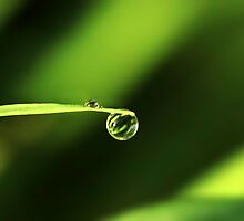Morning Dew by Evelina Kremsdorf