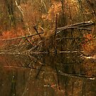 A Dead Tree's Reflection by RockyWalley