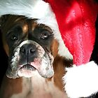 Christmas Boxer dog by ritmoboxers