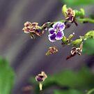 The Last Bloom by Elisabeth Dubois