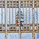 Rusty gate by Silvia Ganora