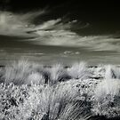 Philip Island - Infrared World by lightsmith