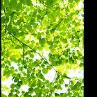 Tree Leaves... by Patrick Wu