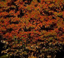 Autumnal Splendor ~ Part Two by artisandelimage
