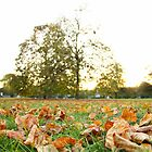Autumn in the Common Close by Llewellyn Cass