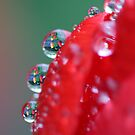Gardens in the Droplets by Debbie  Roberts