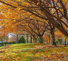 Autumn Trees by Alberto  DeJesus