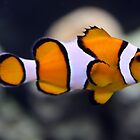 Clown Fish by CatKV